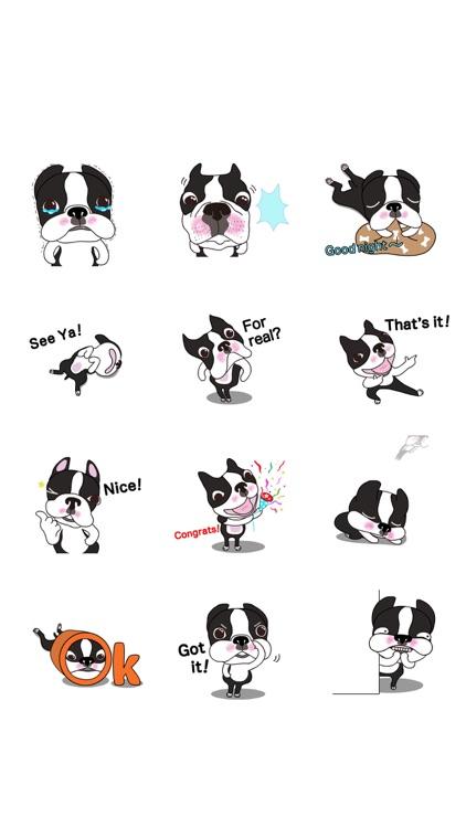 Animated Boston Terrier 1 screenshot-5