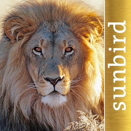 The Golden Safari Guide