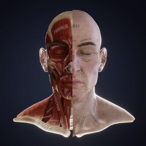 Lex: Human Head Anatomy
