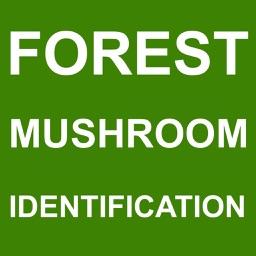 Forest Mushroom Identification
