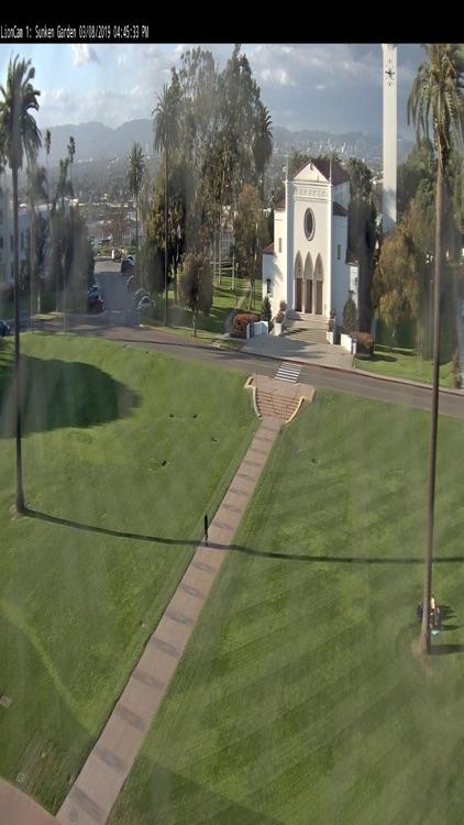Lion Cams