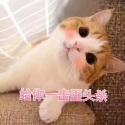 撩人小猫咪表情包