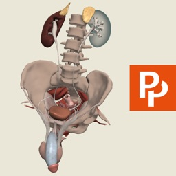Male Pelvis: 3D Real-time
