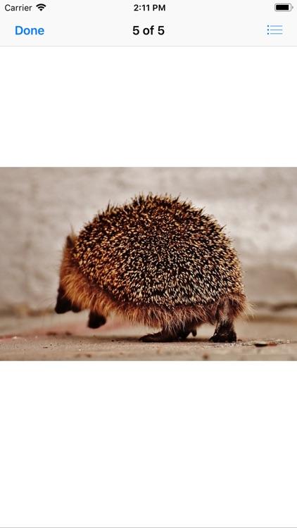 My Hedgehog Stickers screenshot-6