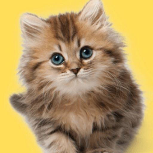 Cat Wallpaper and Background