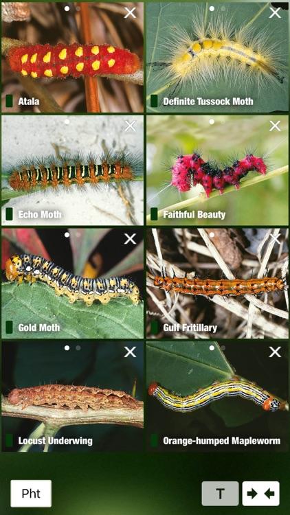 Caterpillar Id USA East Coast screenshot-4