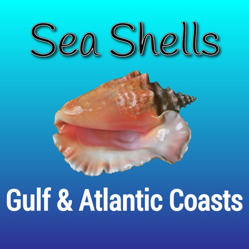 Gulf and Atlantic Sea Shells