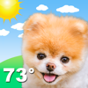 Perrito y Clima: Weather Boo
