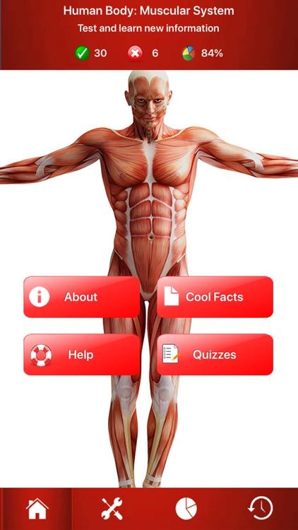 Human Muscular System Trivia by Gulsen CAKIR