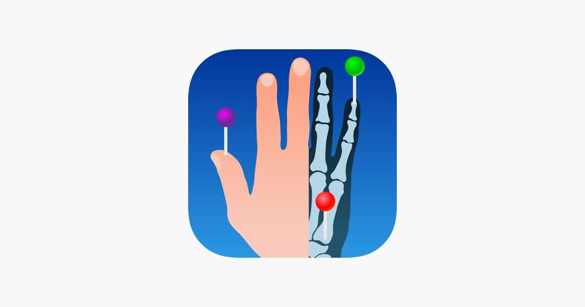 IMAIOS e-Anatomy on the App Store