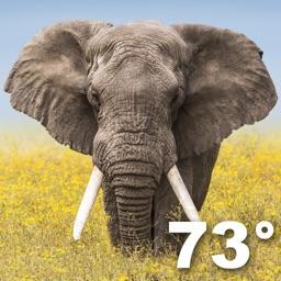Wildlife Wallpaper Weather