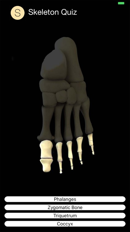 Skeleton Quiz screenshot-4