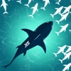 饥饿的鱼:喂养和成长