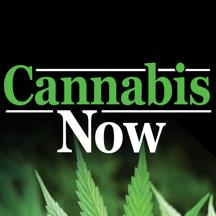 Cannabis Now