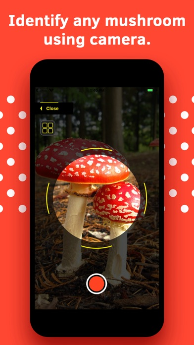 Mushroom Identification screenshot 1