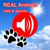 2000+ Animal Sounds Calls