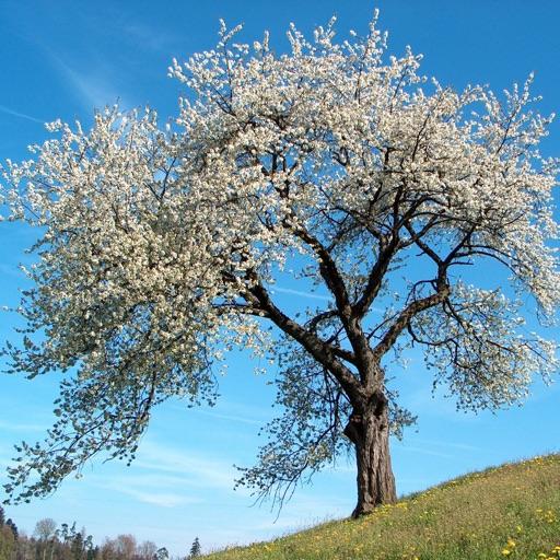 Экогид - Деревья летом
