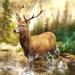 Hunting Clash: Hunter World Hack Online Generator
