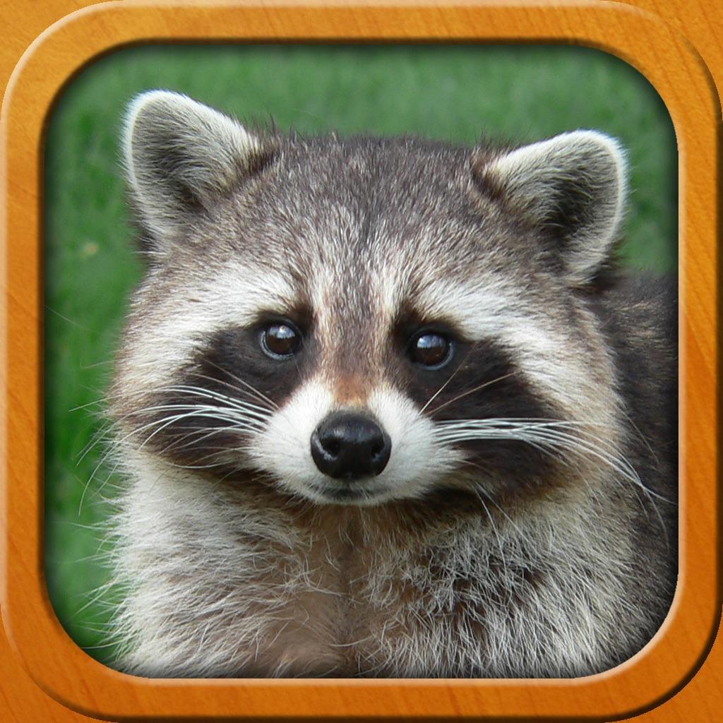 Animals for Kids, full game hack