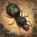 The Ants: Underground Kingdom Hack Online Generator
