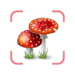 Mushroom Fungus Identifier AI