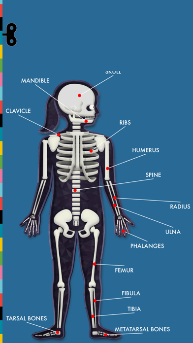 The Human Body by TinybopScreenshot of 3