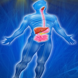 Digestive System Trivia