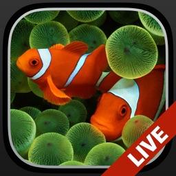 Aquarium Dynamic Wallpapers+