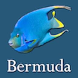 Bermuda Reef Life HD