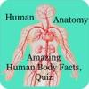 Amazing Human Body Facts, Quiz