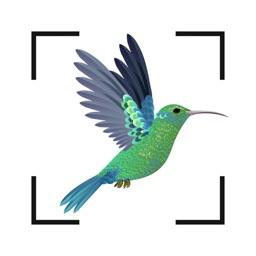 Bird identifier Bird Finder