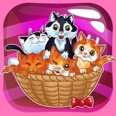 Activities of Bubble Kitty Rescue