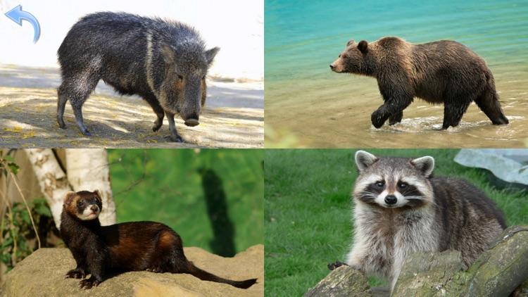 Animals for Kids, toddler game screenshot-5