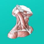 Easy Anatomy - Атлас & Тесты на пк
