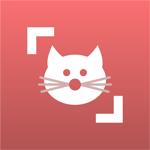 Cat Scanner на пк