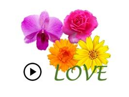 Animated Cute Flower Greetings
