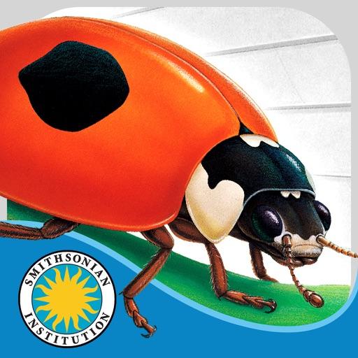 Ladybug at Orchard Avenue