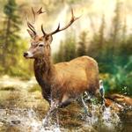 Hunting Clash: Jeu de chasse на пк