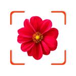 Plant Identifier - FindPlant pour pc