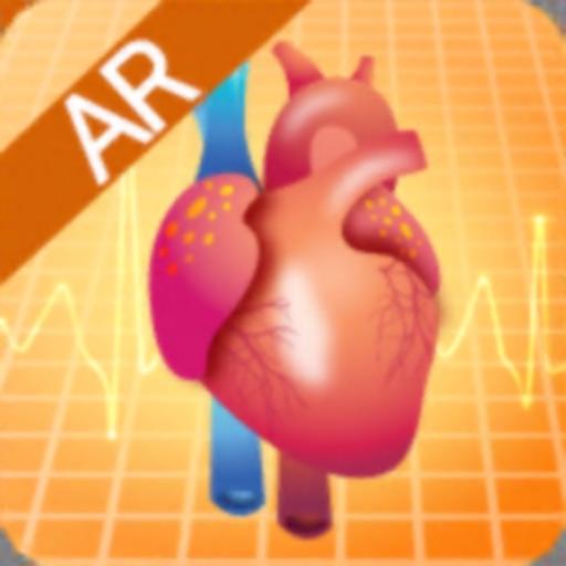 심장의 구조