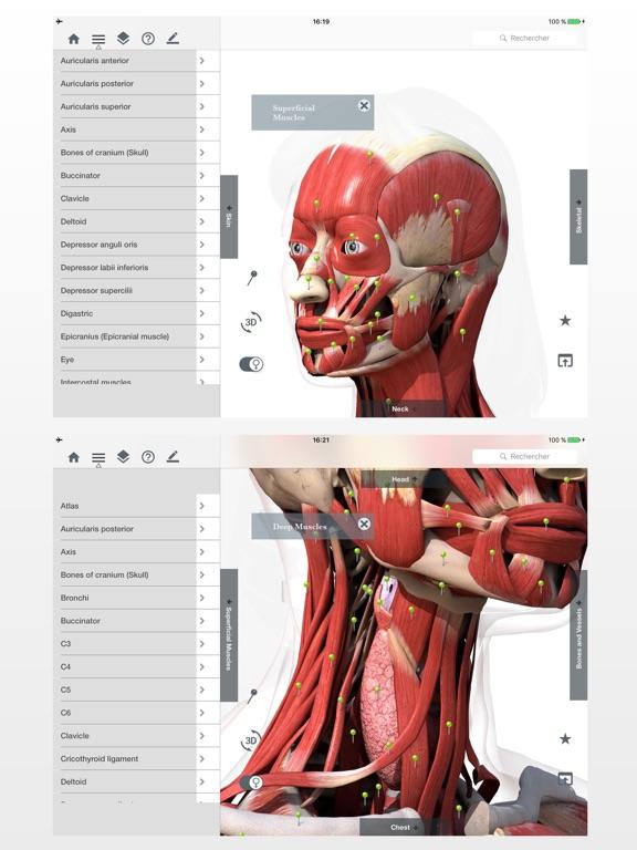 Anatomie Einfach : Lerne Muskeln Skelett & Knochen App ...