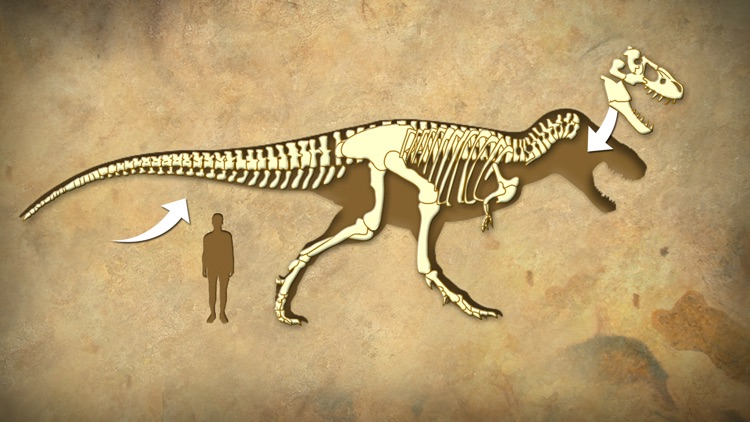 Dinosaur Fossils - History for kids screenshot-2