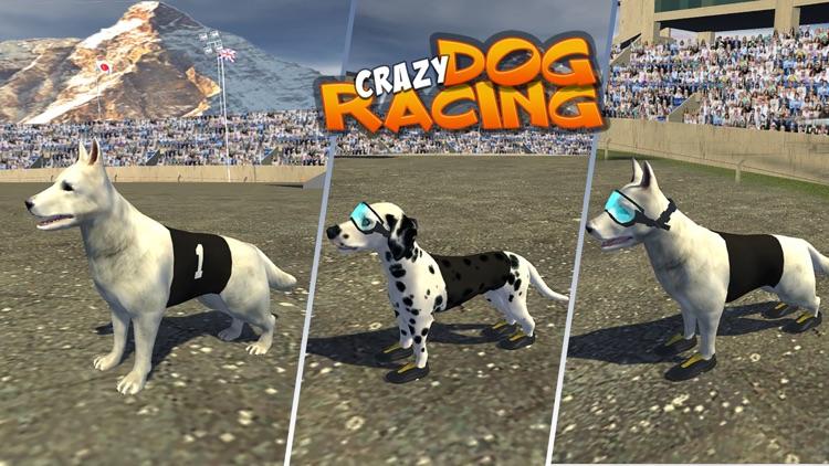Crazy Dog Racing : Chase Racing Bunny With Pet Dog