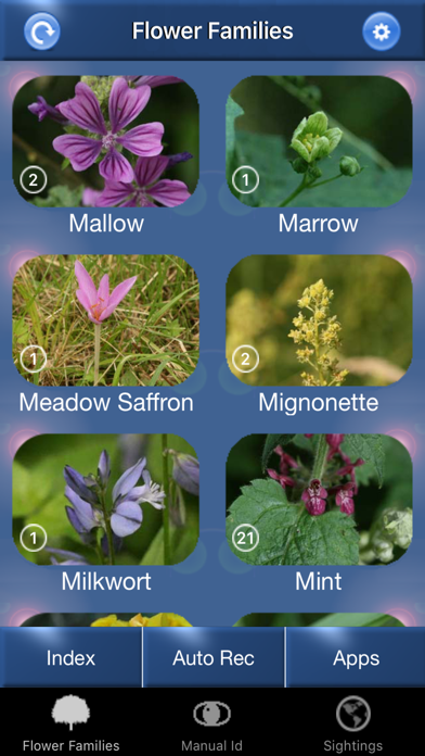 Wild Flower Id Automatic Recognition British Isles Screenshot 1