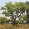 East African Tree Planner - iPadアプリ