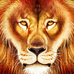 3D Lion Simulator Animal Hunting Survival Games