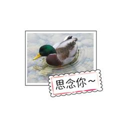 農場動物祝賀卡 stickers by wenpei
