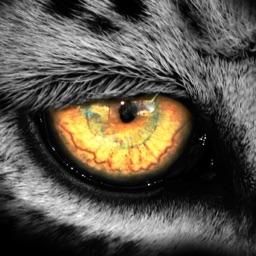Leopard.tv Wildlife magazine