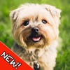 Dogs Memory - Cute Dogs Memory Match Game