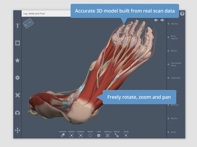 Leg Ankle Foot 3d Real Time On The App Store